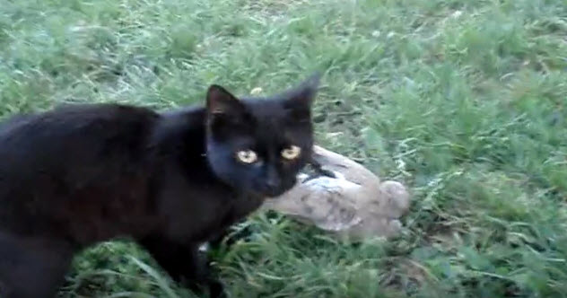10-cat-dead-pigeon-use-this