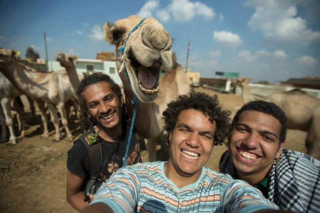 This is probably the only camel who wasn
