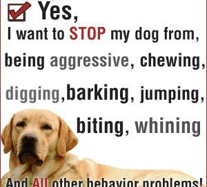 2016.01.13.dogtraining