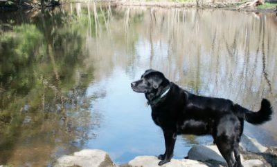 Black-dog-e1382258070278.jpg