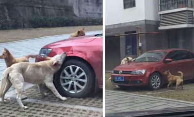 stray-dog-sweet-revenge.jpg