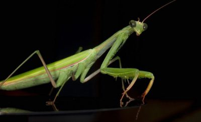 mantis-e1372079827453.jpg