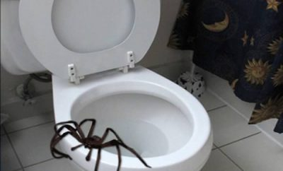 a98968_found-in-toilet_10-spider.jpg
