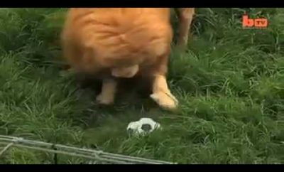 soccer-isnt-just-for-humans.jpg